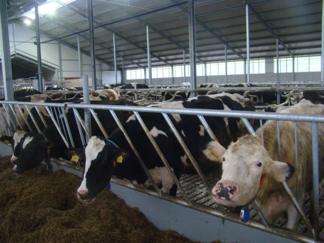 Использование комплексных кормовых добавок - Кормление