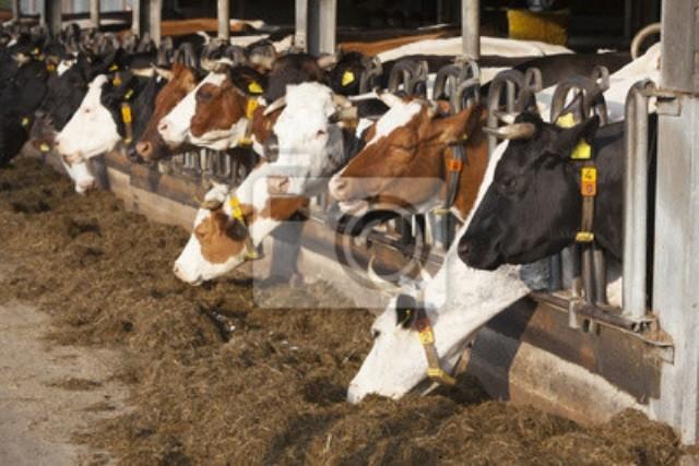 Перспективы кормления животных нетрадиционными кормами - Кормление