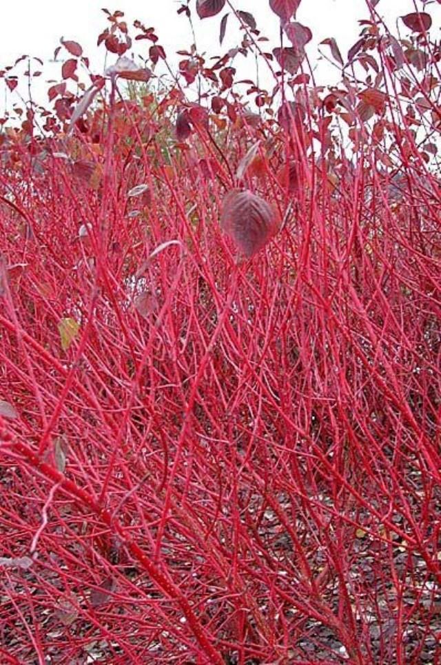 Висячие цветники в Сибири - Посадка растений