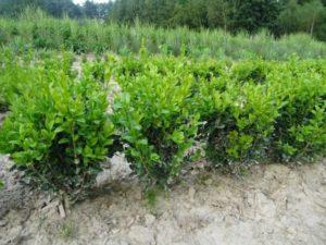 Почвенная смесь для выращивания рассады - Почва и грядки
