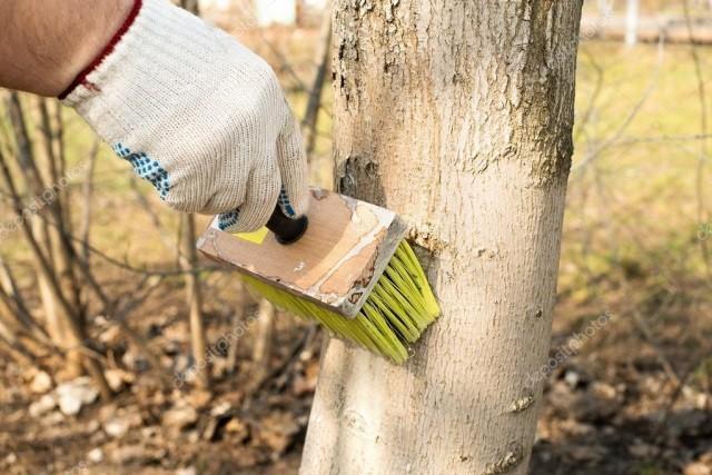 Как лечить ствол плодового дерева - Вредители и болезни