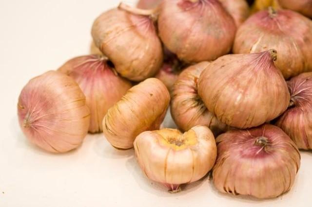 Гладиолусы - размножение луковицами - Посадка растений