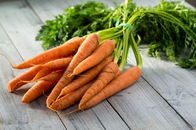Выращиваем морковь у себя на огороде - Посадка растений Сорта