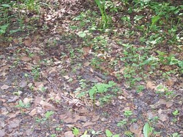 Мульчирование почвы - Почва и грядки