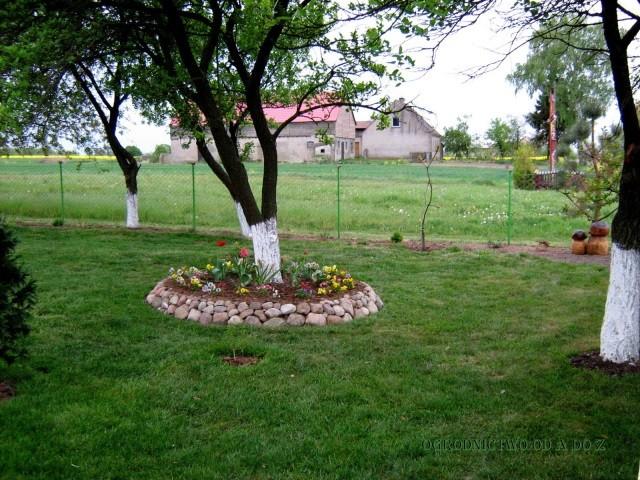 Побелка садовых деревьев  осенью - Уход