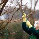 Спасаем подмерзшие деревья - Уход