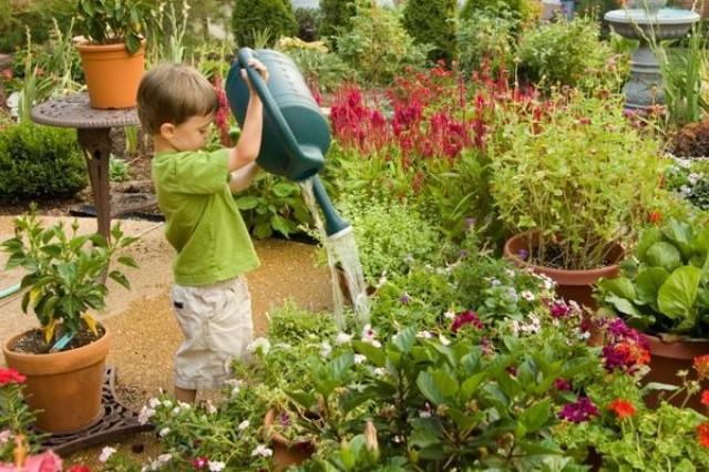 Полив растений, как правильно поливать растения - Уход