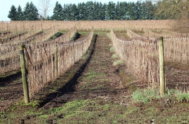 Посадка малины осенью и весной - Посадка растений