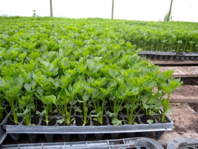 Когда сажать рассаду овощей - Посадка растений