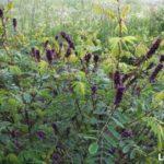 Семена и саженцы - Посадка растений