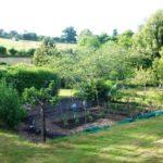 Овощные хитрости - Посадка растений