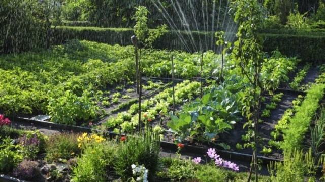 Полезные советы по огороду и саду - Уход
