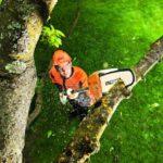 Сращиваем деревья - Уход