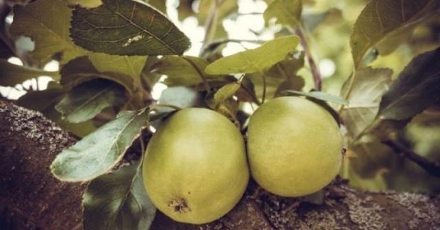 Тепло и свет в сельском хозяйстве - Уход