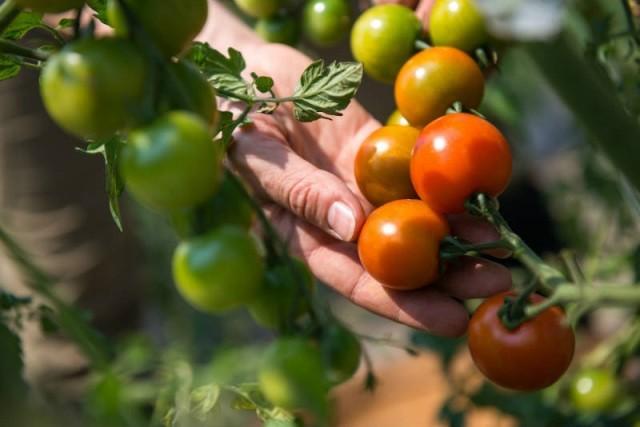 Опасность пестицидов для человека - Вредители и болезни