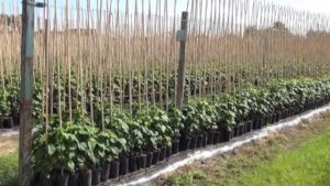 Как вырастить рассаду - Посадка растений Уход