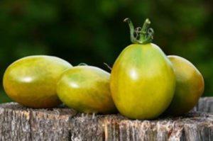 Всё о зеленоплодных томатах - Сорта
