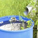 Сбор дождевой воды для полива - Уход