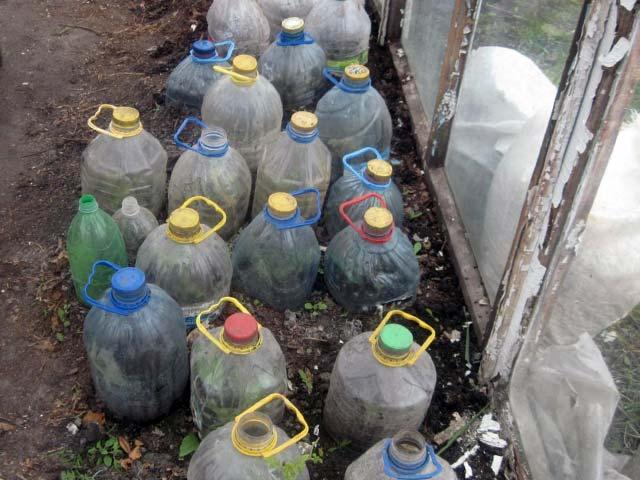Как сажать розы черенками осенью под банки и контейнеры - Посадка растений
