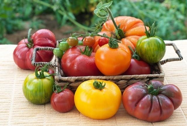 Вкусные томаты сто пудов и медвежья лапа - Сорта