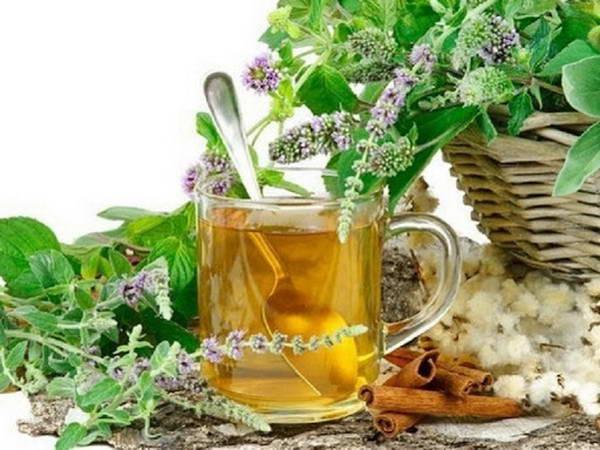 Травы от ангины: простые и быстрые средства - Лекарственные растения