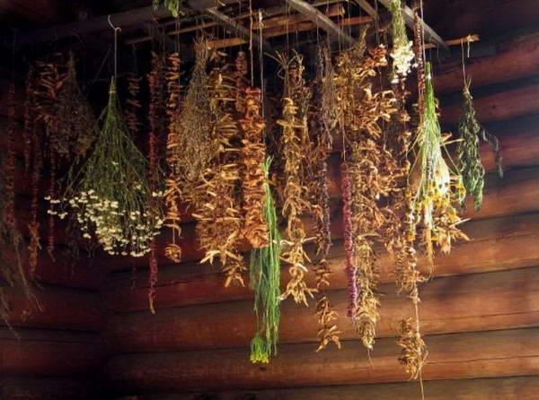 Заготовка лекарственных растений - Лекарственные растения