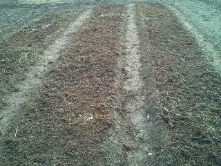 Правильно сажаем лук-севок на репку весной - Посадка растений Уход